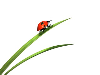 Ladybird on a blade of grass