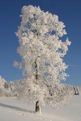 Tief verschneiter Baum