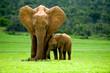 Fototapeten,elefant,mutter,baby,afrika