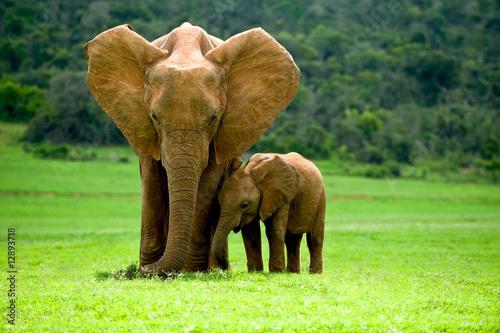 Poster Olifant Elefantenmutter mit Jungtier