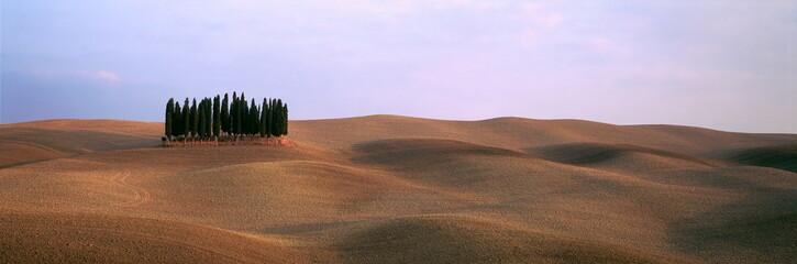 Abendsonne,Zypressen Wald auf gepflügtem Ackerland,Toskana