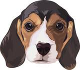 Basset hound dog poster