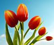 roleta: Frühlingsblumen