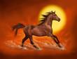 horse sunlight
