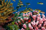 Fototapete Ozean - Navy - Fische