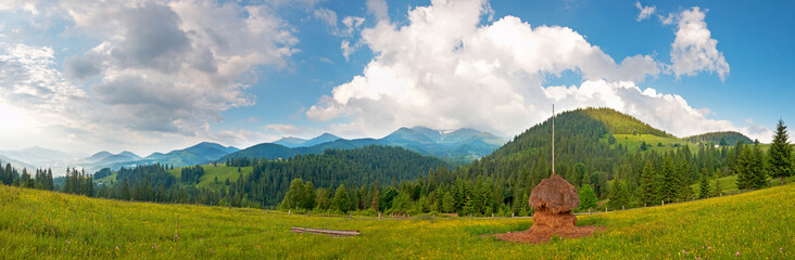Summer mountain meadow