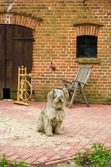 Hund mit Spinnrad, dog with spinning wheel