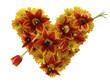 happy flower heart with tulip arrow