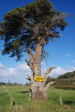 "Baum mit ""backpackers""-Schild; ""backpacker's"" tree"