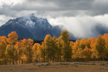 Storm, Aspens and Tetons
