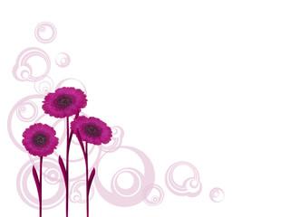 Blümenhintergrund,Gerbera pink