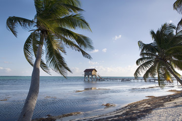 Palms and Hut on the Beach