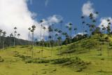 Krása Valle de Cocor