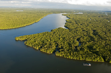 Aerial view of mangrove forest Sarawak River Borneo