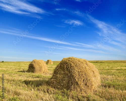 summer in the fields