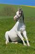 Pferd sitzt