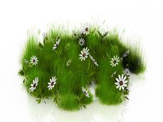 herbe et pâquerettes