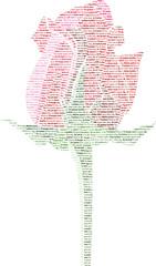 Una rosa d'amore