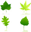 Green maple, chestnut, oak and beach leaves