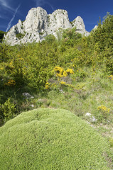 Mountain landscape with yellow flowers