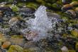 spring fountain - 13083954