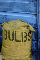 bag of bulbs