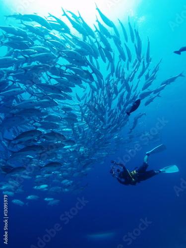 水中撮影 - 13095979