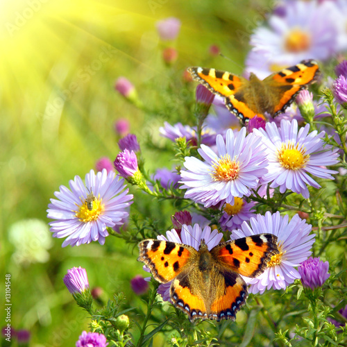 Keuken foto achterwand Vlinder two butterfly on flowers