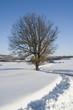 Orme sulla neve 3