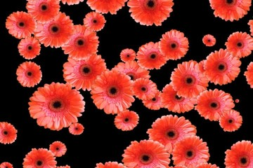 Red flowers flying - digital animation
