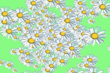 Bunch of white watercolor daisies - digital animation