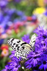 蝶の楽園 4
