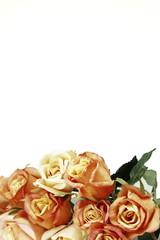 Pink & Yellow Roses (Watercolor Watercolour)