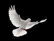 canvas print picture - dove flying