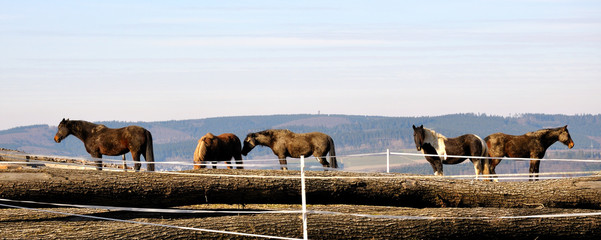 Pferdereihe