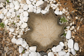 Large stone maple leaf