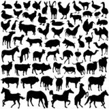 farm animals vector poster