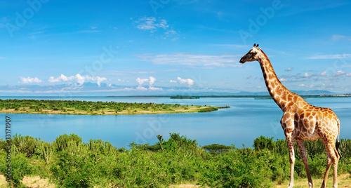 Fotobehang Rivier Nile river, Uganda