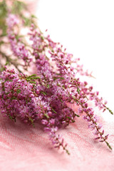 bouquet of heather flowers over pink background