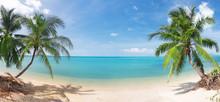 Panoramische tropisch strand met kokospalm