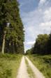 Woodland track vert