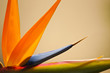 Abstract Bird of Paradise