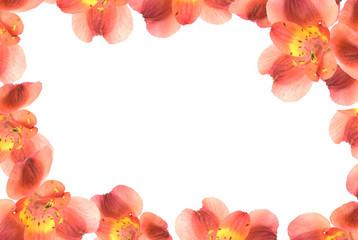 Flower frame/ border