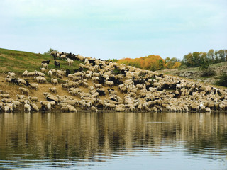 sheep in pasture lake
