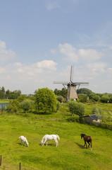 Windmill the Hoop