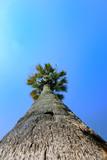 Tourisme - Palmier géant sous ciel bleu poster