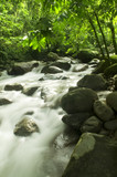 Mountain stream in a forest