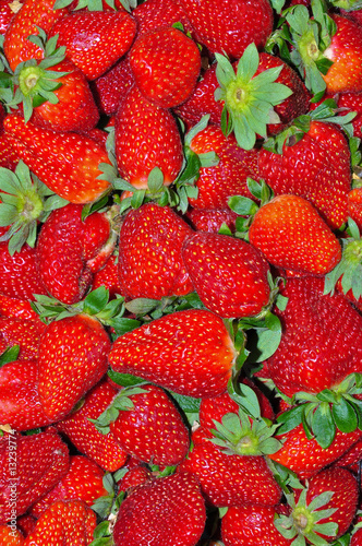 Garden Strawberry 3