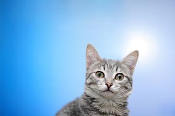 Tabby-cat portrait