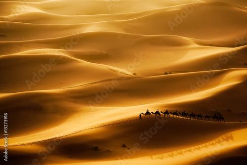 Fototapeten,kamel,touristen,sahara,landschaft